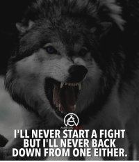 Memes, Never, and Fight: AMBITIONCIRCLE  I'LL NEVER START A FIGHT  BUT I'LL NEVER BACK  DOWN FROM ONE EITHER. Never back down from a challenge! - DOUBLE TAP IF YOU AGREE!