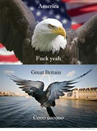 America Fuck Yeah: America  Fuck yeah  Great Britain  We Know Meme
