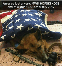 America, Dogs, and Friends: America lost a Hero. MWD HOPSKI K008  end of watch 1058 am Mar272017 RIP - - ❎ DOUBLE TAP pic 🚹 TAG your friends 🆘 DM your Pics-Vids 📡 Check My IG Stories 💥Check the link in Bio 👉@veterancollection 🔥Follow us @veterancollection - - - Source @pawesome__dogs 🇺🇸🇺🇸🇺🇸🇺🇸🇺🇸🇺🇸🇺🇸🇺🇸 usarmy armylife usnavyseal navylife militarylife militarylove usmilitaryacademy navylife usmilitary usarmyveteran veterans supportthetroops supportourveterans usnavy USMC USCG usmarines armedforces semperfi usairforcepride usairforce hooah Oorah armystrong infantry activeduty supportourtroops usarmedforces