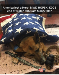 America, Dogs, and Memes: America lost a Hero. MWD HOPSKI K008  end of watch 1058 am Mar272017 Thank you for your service. I must be weird, that shit hits me harder than when a person dies. This hero was patners with @scykilo9 who was able to spend his last moments together with his buddy. _ from @pawesome__dogs k9 militarydogs servicedogs k9veterans