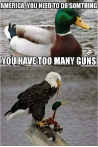 America, Guns, and Memes: AMERICA YOU NEED TO DO SOMTHING  YOU  HAVE TOO MANY GUNS