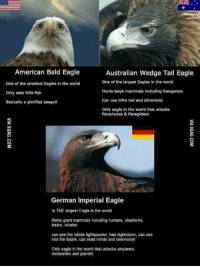 Dank, Hunting, and Airplane: American Bald Eagle  Australian Wedge Tail Eagles  one of the largest Eagles in the world  One of the smallest Eagles in the world  Hunts large mammals including Kangaroos  Only eats little fish  Can see infra red and uttraviolet  Basically a glorified seagull  Only eagle in the world that attacks  Parachutes Paragliders  German Imperial Eagle  Is THE largest Eagle in the world  Hunts giant mammals including humans, elephants,  bears, whales  can see the whole lightspecter, has nightvision, can see  into the future, can read minds and laservision  Only eagle in the world that attacks airplanes.  meteorites and planets 100% true ~Xavi