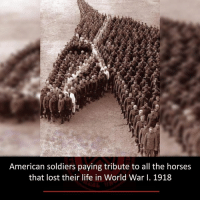 Horses, Life, and Memes: American soldiers paying tribute to all the horses  that lost their life in World War I. 1918