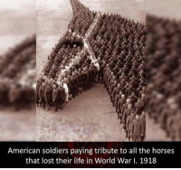 Guns, Horses, and Life: American soldiers paying tribute to all the horses  that lost their life in World War I. 1918 Personally. I I have never seen this pic before.. show it some love y'all! - - Follow me: @thecombatpage for more!! - gun merica USA GodBlessAmerica secondamendment 2ndamendment defendthesecond military supportthetroops operator ammo onenationundergod guns conservative liberal politics liberty country firearms guncontrol patriotic usarmy righttobeararms 2ndamendment donttreadonme red hillaryforprison2016 callofduty ww2