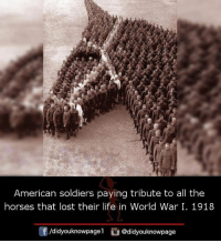 Horses, Life, and Memes: American soldiers paying tribute to all the  horses that lost their life in World War I. 1918  酎/d.dyouknowpagel。@didyouknowpage