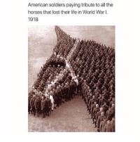 Horses, Life, and Memes: American soldiers paying tribute to all the  horses that lost their life in World War I  1918 Pretty iconic ❤️ @peopleareamazing for more incredible posts horsesofinstagram tribute ww2 respect