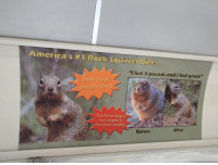 "Squirrel: America's #1 Rock Squirrel Diet!  ""I lost 3 pounds and I feel great!""  Don't eat  people food  You'll live longer,  lose weight, &  bite fewer people!  Before  After"