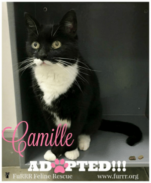 """ADOPTED!!!! IT HAS FINALLY HAPPENED!!!  Camille has gone home with her new cat daddy!!! 😻 Camille isn't the """"going home"""" picture kinda gal but we hope to get update pictures ... in any event this was a very happy day!!!! Camille happy life, you deserve it sooooo much! <3 #furrrfelinerescue #adoptdontshop #camille #517days: amille  ADPTEDI?  FuRRR Feline Rescue  www.furrr.org ADOPTED!!!! IT HAS FINALLY HAPPENED!!!  Camille has gone home with her new cat daddy!!! 😻 Camille isn't the """"going home"""" picture kinda gal but we hope to get update pictures ... in any event this was a very happy day!!!! Camille happy life, you deserve it sooooo much! <3 #furrrfelinerescue #adoptdontshop #camille #517days"""