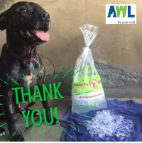 Memes, 🤖, and Camel: AML  By your side  IRSTY  thirsty com  camel A big THANK YOU to the wonderful people at Thirsty Camel SABottle Shops 🐪 and Adelaide Ice ❄️  As you can see your donation for today's heat wave is much appreciated by the animals at the AWL! 🐶🐱🐰