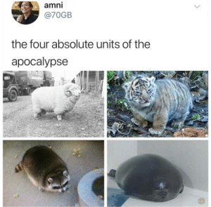 The Apocalypse: amni  @70GB  the four absolute units of the  apocalypse
