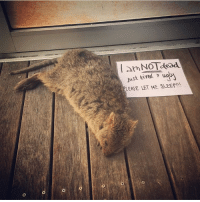 Target, Tumblr, and Ugly: amNOTdesd  just tired ugui  EASE LET ME SLEEP!!! duckandorpenguin:  ilyasaurus: Reblog if you, too, are not dead- only tired and ugly. same