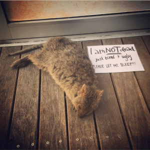 Tumblr, Ugly, and Blog: amNOTdesd  just tired ugui  EASE LET ME SLEEP!!! duckandorpenguin:  ilyasaurus: Reblog if you, too, are not dead- only tired and ugly. same