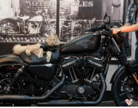 Happy Thursday from the Cattitude Cat of the Day, Ducky.  He was born to be wild!  Thanks to Erika Olson from sharing!: AMO LEGO  CYCLES Happy Thursday from the Cattitude Cat of the Day, Ducky.  He was born to be wild!  Thanks to Erika Olson from sharing!