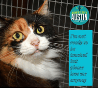 Memes, 🤖, and Shadow: AMPLIFY  AUSTIN  I'm not  TCTkdly to  touched  lease  LODC 11Ue We don't have a million dollar budget. We don't have paid admin staff- we have our kitty nannies  taking care of 90 aged and health/behaviorally compromised cats- and they volunteer a lot of their time. We sterilize on average 500 cats each year- well over 8K cats to date were adopted or live a baby free life now thanks to our trappers and TNR. The gas chamber that once claimed so many lives is no longer in existence in Taylor, Tx because of our activism. Ordinances that allow TNR exist in several cities b/c we exist. We advocate and educate and reach out to give back to other rescues and individuals in need through the One Life Fund. We're pretty small in many ways and big in others.  .  So with this being our biggest fundraiser of the year,  if you have not, would you please pre-schedule your donation to our Amplify page.  We have met our match grant of $5K but a few pages still have individual match offers.  My husband will match up to a $1000 on my page and there is a $600 match on my granddaughters page.  There's still a bit of a match left on Pat's page  but any donation on any page would be appreciated- it all goes to Shadow Cats.  . Would you consider a pre-scheduled donation to a great lil cat house in central Texas?  Be sure to watch the Leaderboard here the night of March 2nd at 6pm too! . Sheila's page- https://amplifyatx.ilivehereigivehere.org/SheilaLovesShadowCats2017 Paige's page-  https://amplifyatx.ilivehereigivehere.org/PLM2017 Pat's page-https://amplifyatx.ilivehereigivehere.org/feralfarm ALL fundraising pages- https://amplifyatx.ilivehereigivehere.org/nonprofits?organizations_id=514