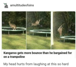 Head, Trampoline, and Kangaroo: amultitudeofsins  Kangaroo gets more bounce than he bargained for  on a trampoline  My head hurts from laughing at this so hard Kangaroo
