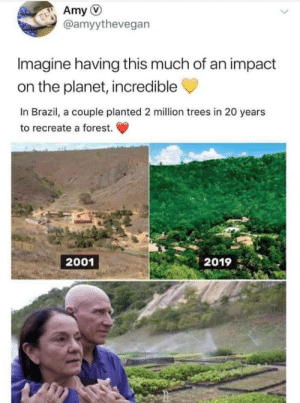 this is incredible: Amy  @amyythevegan  Imagine having this much of an impact  on the planet, incredible  In Brazil, a couple planted 2 million trees in 20 years  to recreate a forest.  2001  2019 this is incredible