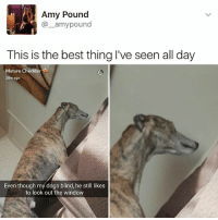 """Memes, 🤖, and Pound: Amy Pound  amy pound  This is the best thing I've seen all day  Mature Cheddar  28m ago  Even though my dogs blind, he still likes  to look out the window """"I follow @kalesalad and u should too"""" - Kendall Jenner and Jesus"""