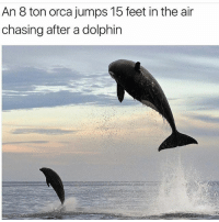 Food, Memes, and Yeah: An 8 ton orca jumps 15 feet in the air  chasing after a dolphin Nah but nature... Physically humans are so inferior, top of the food chain, yeah right.