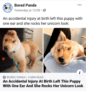 An accidental ingury at birth left this puppy with one ear and she rocks her unicorn look.: An accidental ingury at birth left this puppy with one ear and she rocks her unicorn look.