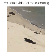 Be Like, Memes, and Good: An actual video of me exercising This is Clyde the Sea Beagle. He's not good at exercising, be like Clyde. Clyde is also @willardsworld half brother.
