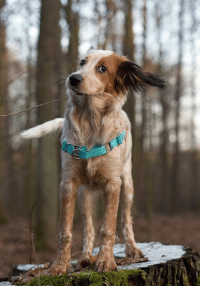 """An adoption story by Iza Malczyk.  """"This is Una, she's almost 6 months old now. She's an English setter mix we brought home at 6 weeks of age. She was very sick and we were afraid she would not make it. Fortunately, she's fine now - she grew much larger than it was expected when she was tiny, sick and malnourished. She's a hyper dog who loves trekking for hours and also a very smart (but sometimes stubborn) girl who already knew many obedience cues at merely 2 months of age :) She's also our first dog - I've been dreaming of having a dog for many years and we couldn't have been given a better dog. <3 """"  I'm glad you chose to adopt your first pet. Did you adopt your first furry child as well? Share your stories in the comments section below. :): An adoption story by Iza Malczyk.  """"This is Una, she's almost 6 months old now. She's an English setter mix we brought home at 6 weeks of age. She was very sick and we were afraid she would not make it. Fortunately, she's fine now - she grew much larger than it was expected when she was tiny, sick and malnourished. She's a hyper dog who loves trekking for hours and also a very smart (but sometimes stubborn) girl who already knew many obedience cues at merely 2 months of age :) She's also our first dog - I've been dreaming of having a dog for many years and we couldn't have been given a better dog. <3 """"  I'm glad you chose to adopt your first pet. Did you adopt your first furry child as well? Share your stories in the comments section below. :)"""