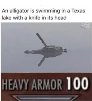 Just look how little is sticking out.: An alligator is swimming in a Texas  lake with a knife in its head  HEAVY ARMOR 100 Just look how little is sticking out.
