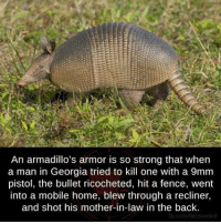 ricochet: An armadillo's armor is so strong that when  a man in Georgia tried to kill one with a 9mm  pistol, the bullet ricocheted, hit a fence, went  into a mobile home, blew through a recliner,  and shot his mother-in-law in the back.  fb.com/factsweird