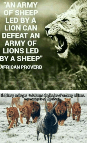 "omg-humor:All-in on the sheep: ""AN ARMY  OF SHEEP  LED BY A  LION CAN  DEFEAT AN  ARMY OF  LIONS LED  A SHEEP""  AFRICAN PROVERB  BY  my money is on the omg-humor:All-in on the sheep"
