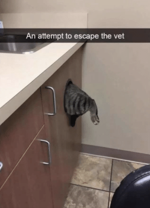 Escape,  Vet, and The: An attempt to escape the vet