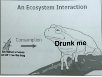 "Fresh, Cheese, and Template: An Ecosystem Interaction  ConsumptionDrunk me  Shredded cheese  strait from the bag <p>Just using a fresh template, is it a buy? via /r/MemeEconomy <a href=""https://ift.tt/2Jek5Bp"">https://ift.tt/2Jek5Bp</a></p>"