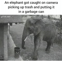 Memes, Trash, and Angels: An elephant got caught on camera  picking up trash and putting it  in a garbage can  lak.net, We don't deserve these angels @handpickedhighlights