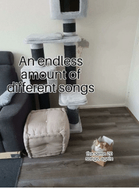 Target, Tumblr, and Blog: An end less  amount Of  olfferen  t songs  the same 20  songs, again memehumor: Why Am I Like This