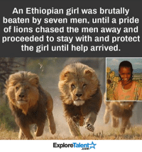 Ethiopians, Memes, and 🤖: An Ethiopian girl was brutally  beaten by seven men, until a pride  of lions chased the men away and  proceeded to stay with and protect  the girl until help arrived.  Explore  alen  .com Wow. Just 1 more reason why lions are the kings of the jungle 👊💪🙌