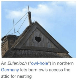 "stormwaterwitch:  : An Eulenloch (owl-hole"") in northern  Germany lets barn owls access the  attic for nesting stormwaterwitch:"