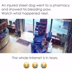 #dogs #doglovers #puppy #puppies #animals #animallovers #petslife #cutestanimals #animallove #animalslife #cuteanimals #animalsworld #animalsforever #animalsouls #petsforlife #lovelyanimalsworld: An injured street dog went to a pharmacy  and showed his bleading paw.  Watch what happened next.  monkoodog  OTHA  The whole Internet is in tears #dogs #doglovers #puppy #puppies #animals #animallovers #petslife #cutestanimals #animallove #animalslife #cuteanimals #animalsworld #animalsforever #animalsouls #petsforlife #lovelyanimalsworld