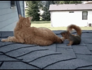 An oddly amenable cat playing with a squirrel.: An oddly amenable cat playing with a squirrel.