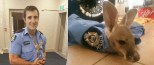 Meme, Tumblr, and Australia: An Officer in Australia Rescued and Adopted a Baby Kangaroo Named Cuejohttp://meme-rage.tumblr.com