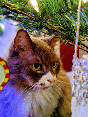An old cat enjoying another new year's Eve: An old cat enjoying another new year's Eve