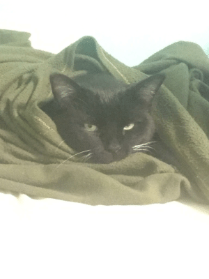 """An old photo of my sweet cat named """"Chubba,"""" as he is quite the chonker, wrapped up in the winter.: An old photo of my sweet cat named """"Chubba,"""" as he is quite the chonker, wrapped up in the winter."""