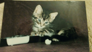 An old pic of my 14 year old cat. Hope u like it :): An old pic of my 14 year old cat. Hope u like it :)