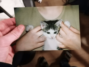 An old picture of my now 17 years old cat: An old picture of my now 17 years old cat