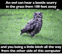 owl: An owl can hear a beetle scurry  in the grass from 100 feet away  and you being a little bitch all the way  from the other side of this computer