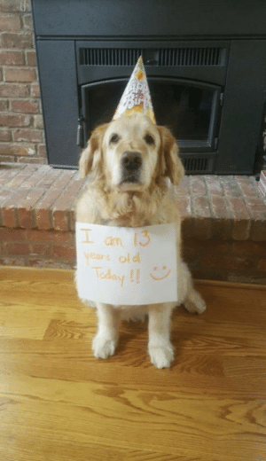 Birthday, Happy Birthday, and Happy: an  years old Are you really gonna scroll without saying happy birthday?