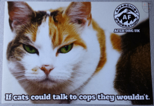 "gaydux:  fuckyeahanarchistposters: ""if cats could talk to cops, they wouldn't""   This is truly in character for them: ANACHIEN  AF  AFED.ORG.UK  Icats could talk to cops they wouldn't. gaydux:  fuckyeahanarchistposters: ""if cats could talk to cops, they wouldn't""   This is truly in character for them"