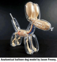 Anatomical balloon dog model by Jason Freeny. This is the definition of creativity