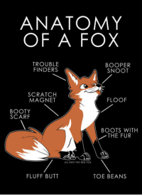 "Booty, Butt, and Club: ANATOMY  OF A FOX  TROUBLE  FINDERS  BOOPER  SNOOT  SCRATCH  MAGNET  FLOOF  BOOTY  SCARF  BOOTS WITH  THE FUR  IC) RIOT THE RED Fox  FLUFF BUTT  TOE BEANS <p><a href=""http://laughoutloud-club.tumblr.com/post/166205765653/anatomy-of-a-fox"" class=""tumblr_blog"">laughoutloud-club</a>:</p>  <blockquote><p>Anatomy of a Fox</p></blockquote>"