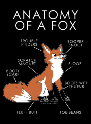 Booty, Butt, and Club: ANATOMY  OF A FOX  TROUBLE  FINDERS  BOOPER  SNOOT  SCRATCH  MAGNET  FLOOF  BOOTY  SCARF  BOOTS WITH  THE FUR  IC) RIOT THE RED Fox  FLUFF BUTT  TOE BEANS laughoutloud-club:  Anatomy of a Fox