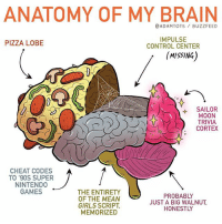 It's science!: ANATOMY OF MY BRAIN  @ADAMTOTS BUZZFEED  IMPULSE  CONTROL CENTER  PIZZA LOBE  MISSING)  SAILOR  MOON  TRIVIA  CORTEX  CHEAT CODES  TO '90S SUPER  NINTEND0  GAMES  THE ENTIRETY  OF THE MEAN  GIRLS SCRIPT  MEMORIZED  PROBABLY  JUST A BIG WALNUT  HONESTLY It's science!