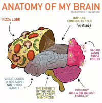 It's science!: ANATOMY OF MY BRAIN  @ADAMTOTS BUZZFEED  PIZZA LOBE  IMPULSE  CONTROL CENTER  (MISSING  4 SAILOR  MOON  TRIVIA  CORTEX  CHEAT CODES  TO '90S SUPER  NINTENDO  GAMES  THE ENTIRETY  OF THE MEAN  GIRLS SCRIPT,  MEMORIZED  PROBABLY  JUST A BIG WALNUT  HONESTLY It's science!