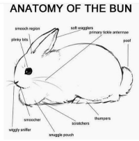 Memes, 🤖, and Tickle: ANATOMY OF THE BUN  smooch region  soft wagglers  primary tickle antennae  plinky bits  poof  thumpers  smoocher  scratchers  wiggly sniffer  snuggle pouch poof